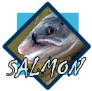 salmon and steelhead gallery page
